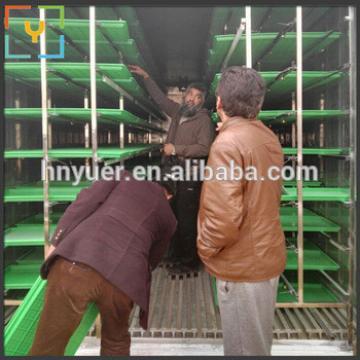 High Output Goat Animal Feed Barley Wheat Hydroponic Fodder Machine In Qatar