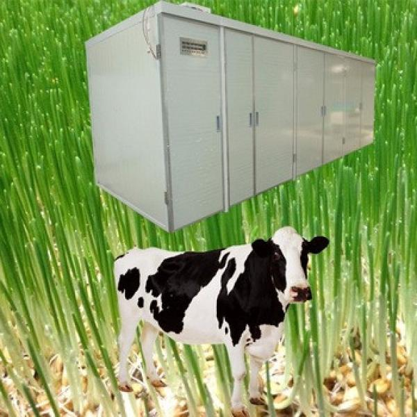 Animal Poultry Livestock Feeding hydroponic barley sprouting machine